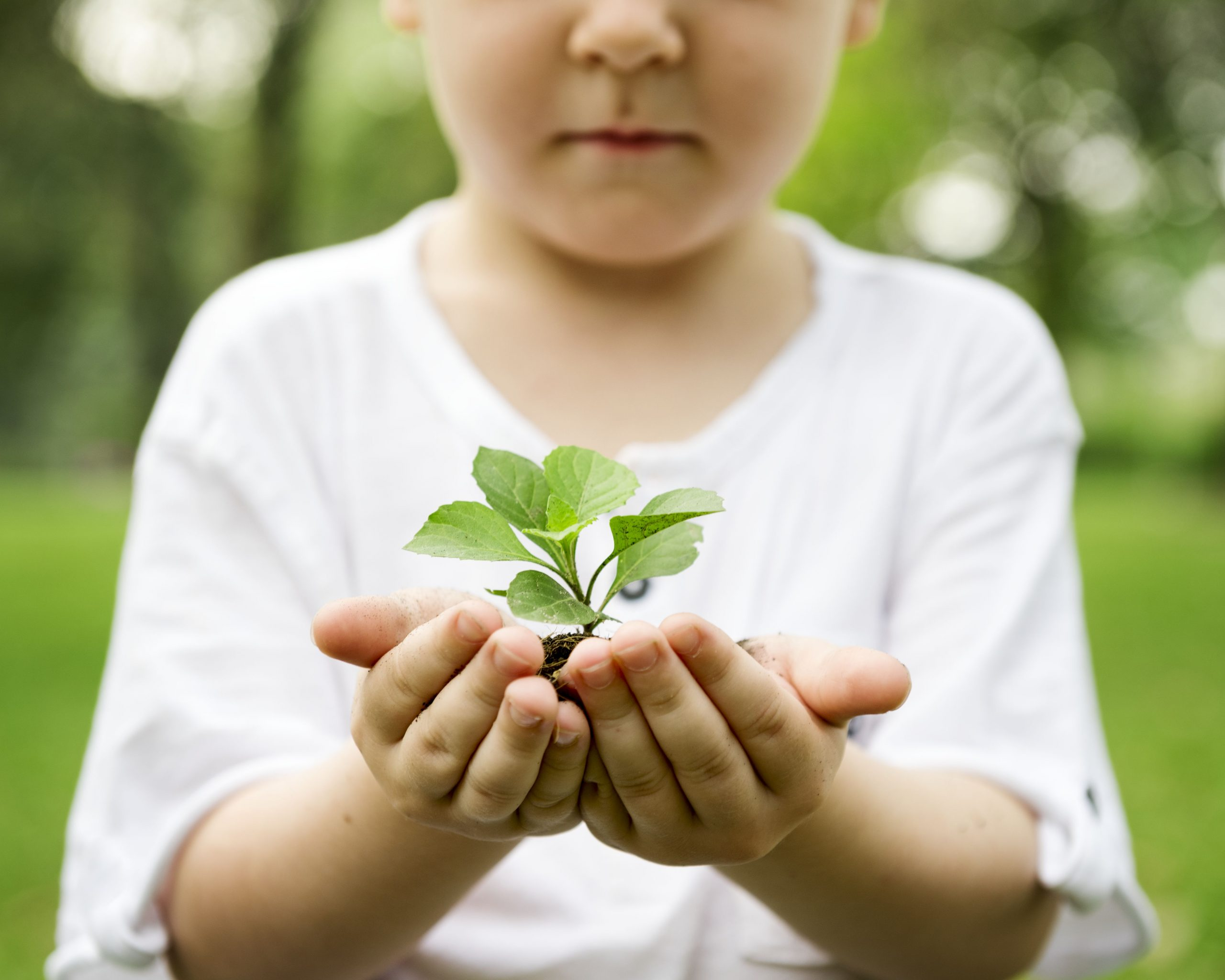 Educação Ambiental: escola municipal catarinense ensina por meio do exemplo