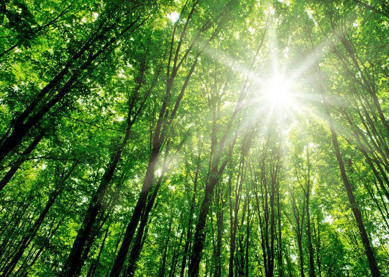 Valmet é classificada no ranking referência de sustentabilidade